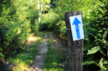Trailrun Vlaamse Ardennen